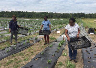 ferme tropicale planting 10