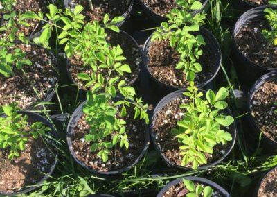 ferme tropicale planting 12
