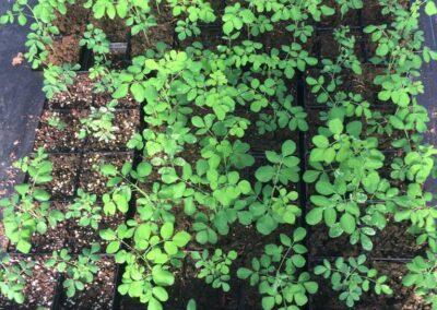ferme tropicale planting 14