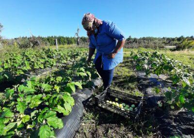 ferme tropicale planting 15