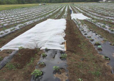 ferme tropicale planting 2