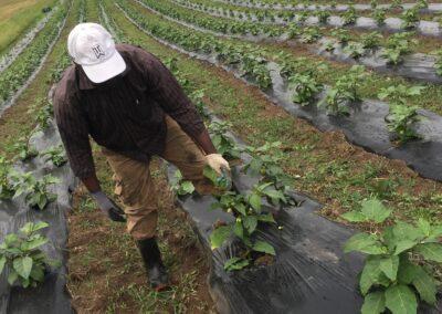 ferme tropicale planting 3